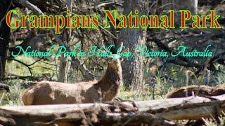 Grampians Australia  City pictures : Visit Grampians National Park | National park in Halls Gap | Victoria | Australia