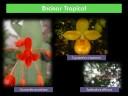 La Asociación para la Conservación de Orquídeas Silvestres (ACoOS), continuando con su objetivo de dar a conocer la importancia de la conservación del as orquídeas mexicanas, presenta un video titulado Las Orquídeas de los Bosques y Selvas de Veracruz el cual muestra algunos de los ecosistemas de Veracruz destacando en cada uno de ellos la orquideoflora presente.Para mayor información visite: http://acoos-orquideas.blogspot.com/o escriba al correo:acoos.orquideas@gmail.com