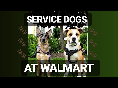 Service dogs at Walmart! | CanadianServiceHank |