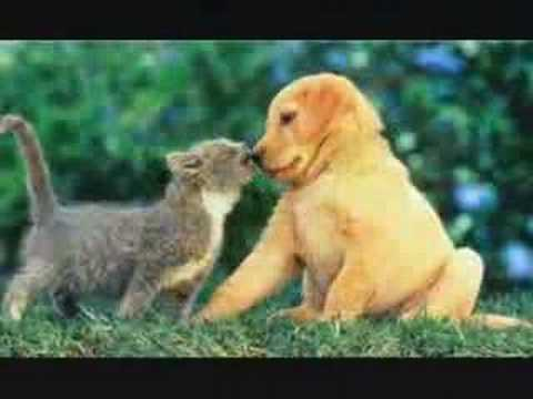 Cute Animals - Why Can't We Be Friends?