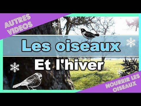 ➳ Nourrir les oiseaux pendant l'hiver !!! : [ ♥ AUTRES VIDEOS ♥ ]