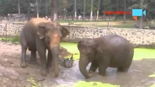 LÁSKA JE LÁSKA aneb když se sloni milují