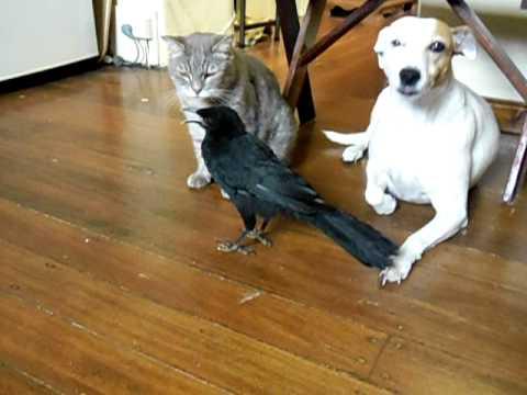 好聰明的鳥,竟然會餵貓狗!!!