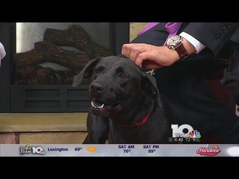 Meet this week's pet of the week from the Roanoke Valley SPCA: B.B.!