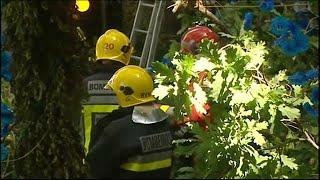 Legkevesebb tizenegy ember lelte halálát egy kidőlő fa alatt a portugál szigeten, Madeirán. Egy katolikus ünnepen történt a...
