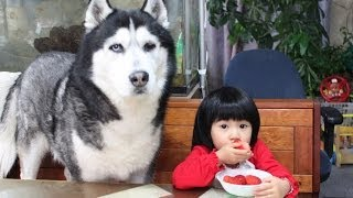 Baby And Giant Dog