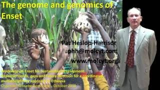SEE TEXT BELOW - ALSO CAPTIONS ON VIDEO The genome and genomics of Enset: what can we learn from banana and other crops to enable Ensete to ...