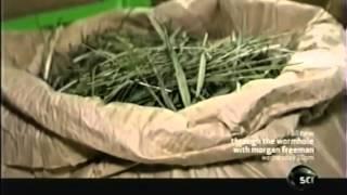 Video Bison Grass Vodka - How It is Made! MP3, 3GP, MP4, WEBM, AVI, FLV Maret 2019
