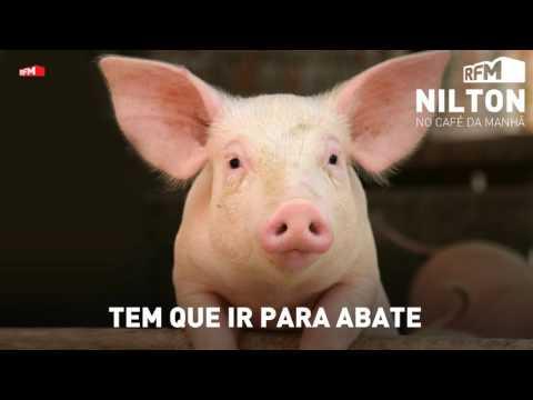 Nilton faz telefonema a indicar que porco tem que ir para abate