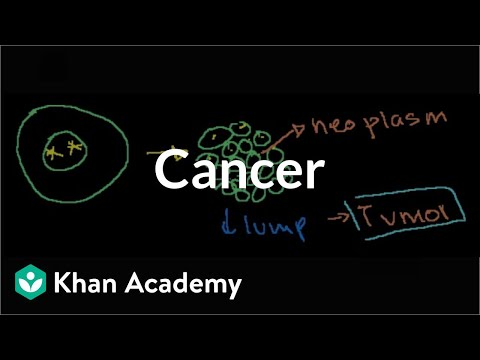 Cancer Video The Cell Cycle And Mitosis Khan Academy