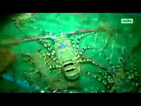 mitv – Shrimp Business:  Low Production At Seas And Farms