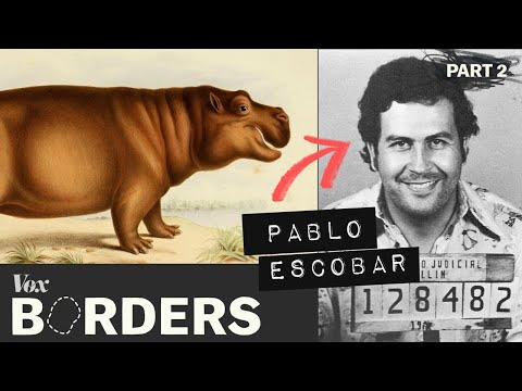 How this drug lord created a hippo problem in