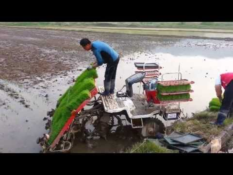 Planting rice in Korea is so Awesome Must watch!