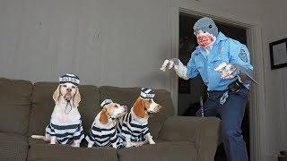 Dogs Arrested by Shark Cop Prank: Funny Dogs Maymo, Penny & Potpie by Maymo