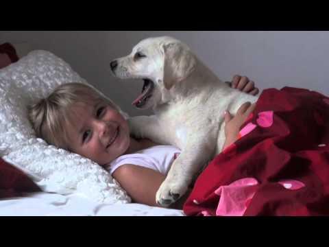 il dolce buongiorno del cucciolo di labrador e della sua padroncina.