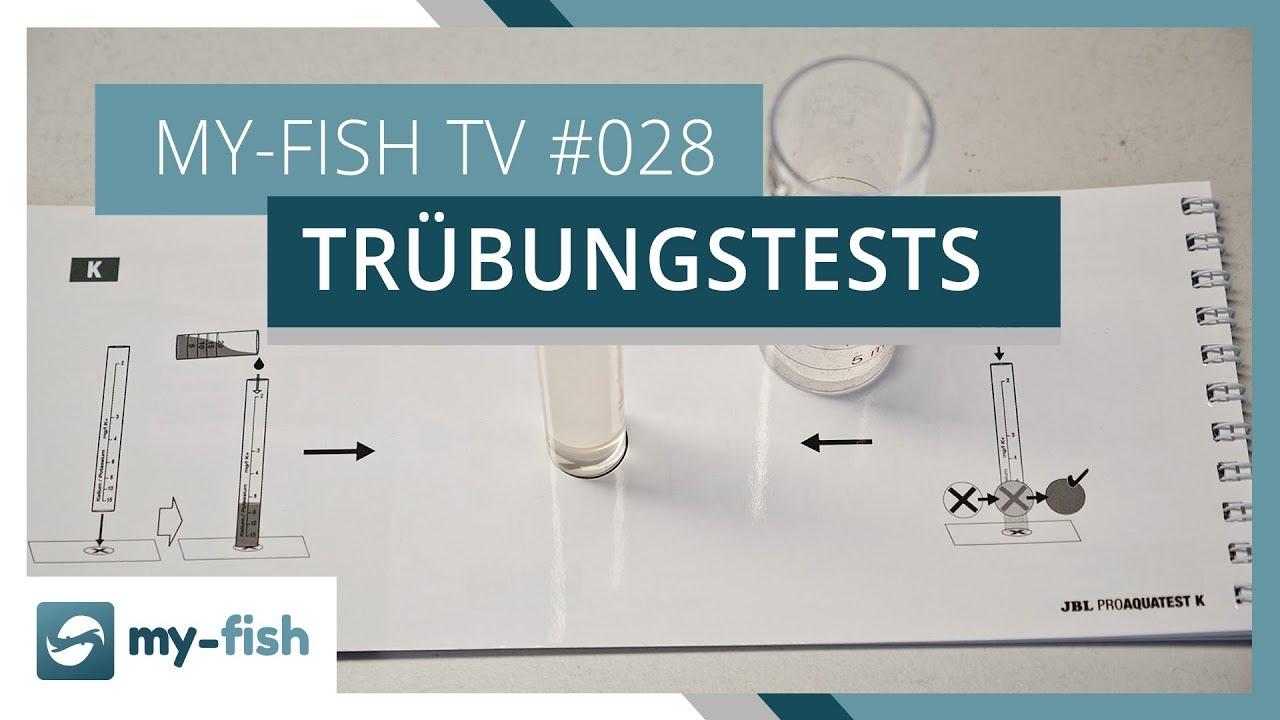 my-fish TV - Deine Nr. 1 Anlaufstelle für alle Themen rund um die Aquaristik 36