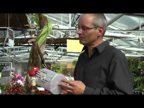 Orchideen Pflege: Orchitop - Freiheit für die Orchideen - Wurzel