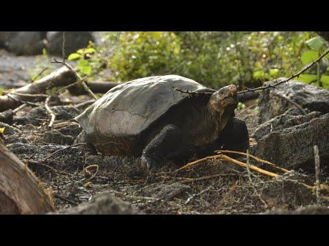 Galapagos Inseln: Riesen-Schildkröte ist doch nicht a ...