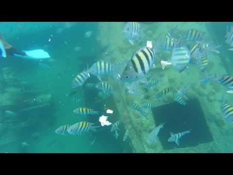 Sandals Barbados Snorkel