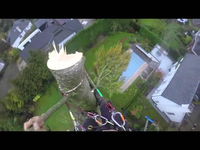 Abattage par démontage et rétentions de trois peupliers de 30 mètres de haut à Uccle