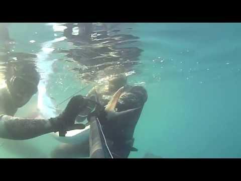emozionante pesca subacquea in apnea!