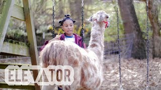 ▼▲ ELEVATOR - Going up daily. » http://elevatormag.com» http://twitter.com/elevator_» http://facebook.com/ElevatorMag» http://soundcloud.com/lvtrmag» http://instagram.com/elevator_pinkcaravan! - A LLAMA BROKE INTO MY HOUSE AGAIN (Official Music Video)Shot by @Remrod★ pinkcaravan!» https://twitter.com/pnkcaravan » https://soundcloud.com/pinkcaravan♫ Submit Music & Videoshttp://elevatormag.com/submissions► Monetize & Distribute your musichttp://elevatormag.com/distribution► Advertise on Elevatorhttp://elevatormag.com/advertising► Elevator Merchhttp://elevatormag.com/shop