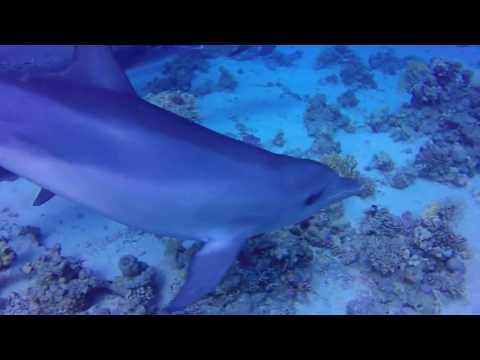 Dolphin Dive Red Sea 2015_Merülő helyek