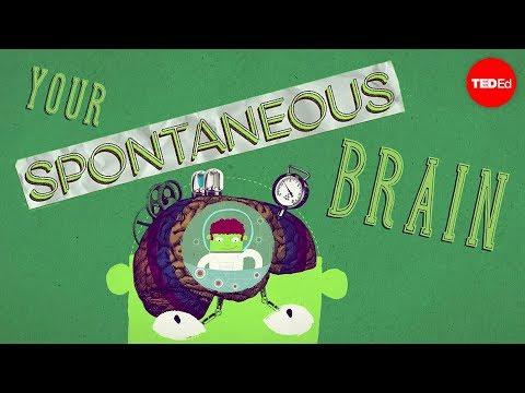 How spontaneous brain activity keeps you alive – Nathan S. Jacobs
