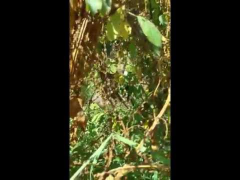 video di Robeto Peria