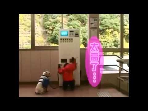 Chú Khỉ Thông Minh Phiêu Lưu Ký 12