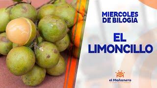 Miercoles de biología – El Limoncillo