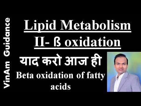 Lipid metabolism II - Beta oxidation of fatty acids