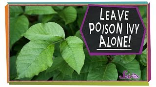 Leave Poison Ivy Alone! by SciShow Kids