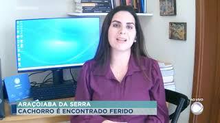 Polícia procura por suspeito que agrediu cachorro em Araçoiaba da Serra
