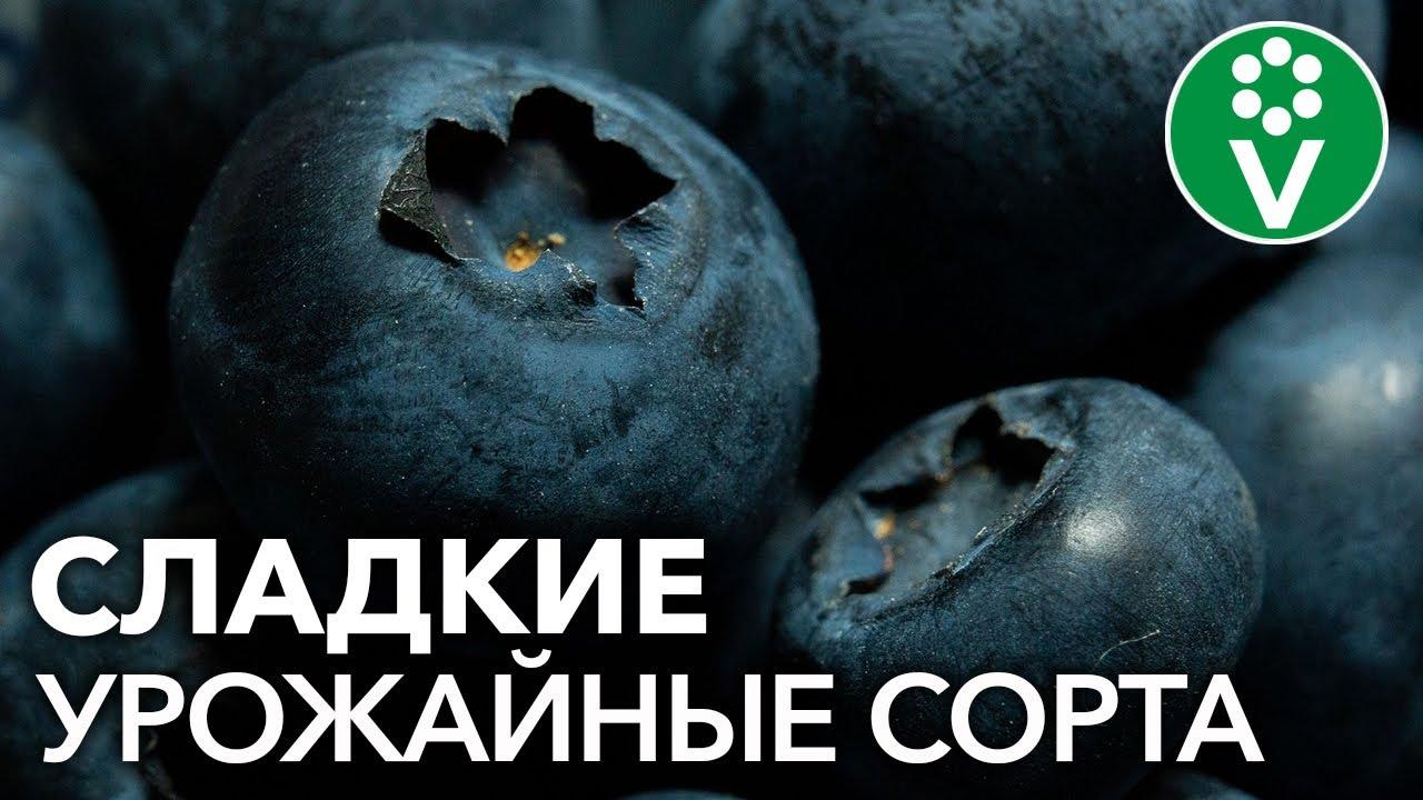 Голубика Блюкроп