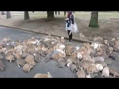 ragazza assalita dai conigli!
