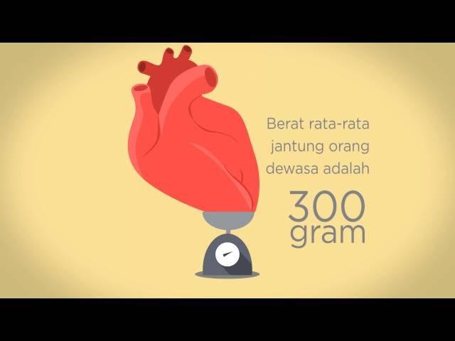 Fakta Jantung Yang Mungkin Kamu Belum Tahu