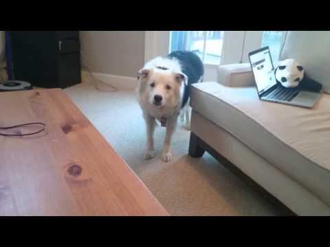 0 snob dog doesn't catch off brand frisbees rebrn com
