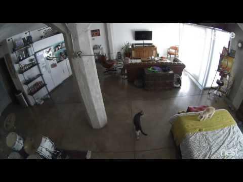 il cane non smette di abbaiare, la reazione del gatto è sorprendente
