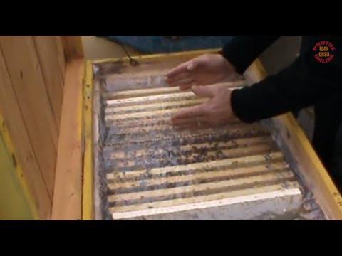 Lectie despre iernarea albinelor in stupi - Sfaturi utile - Apicultura la distanta cu Proful Online