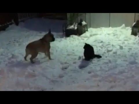 Что подумал кот?