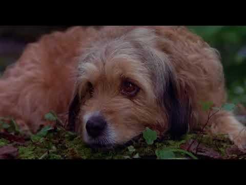 Benji az üldözött 1987 Teljes film magyarul