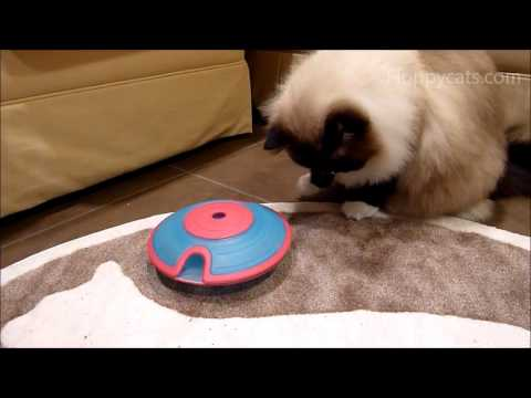 0 Nina Ottosson Treat Maze Interactive Game for Cats Review