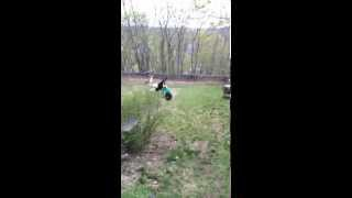 Ridiculously Hilarious Rope Swing Fail