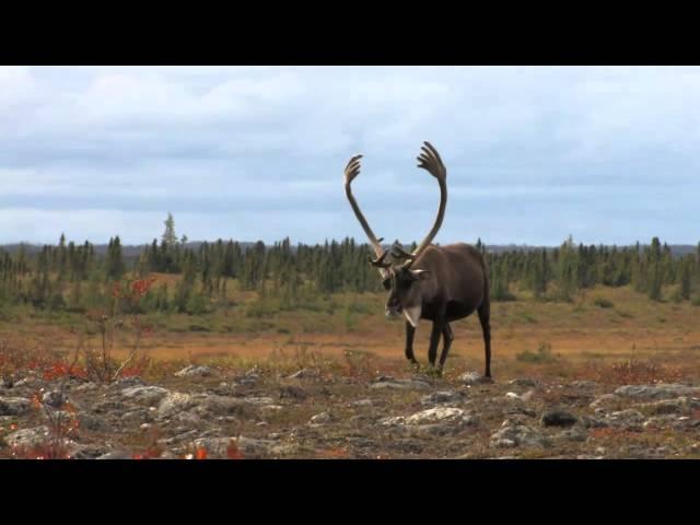 Travel Manitoba Big Game hunting commercial