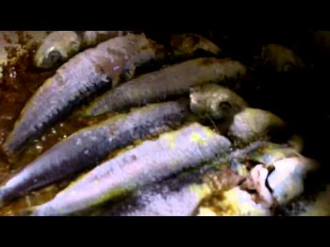 Caribbean Recipe: How to Make a Curry Sardine the Guyanese Way