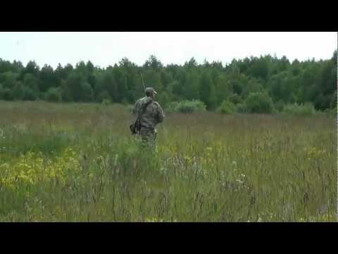Охота спаниеля на сазана
