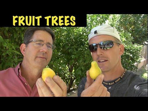 The Best Fruit Trees for Backyard Gardens