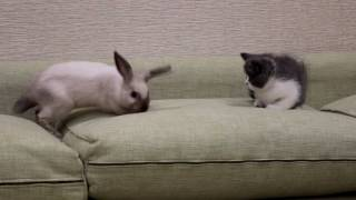 VLOG Кролик и Котик  Битва ПУШИСТИКОВ Кролика и Котика