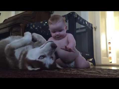 il neonato si avvicina e lo stuzzica: guardate la reazione del cane!